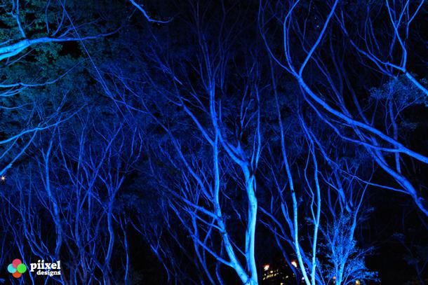 blue-trees-610